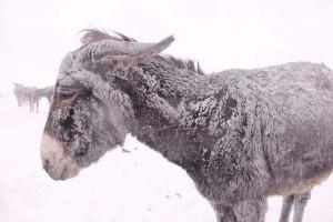 asinello nella neve